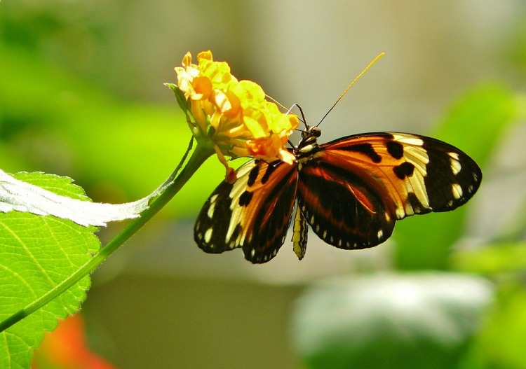 butterfly-336913_960_720